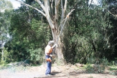 Rental store for CHAINSAW ON POLE 3.9M  300MM BAR in Sydney NSW