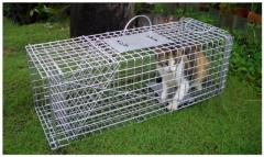 Rental store for CAT TRAP in Sydney NSW